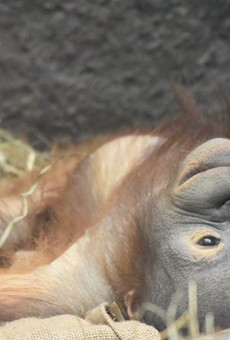 Cleveland Metroparks Zoo to Resume Zooing June 17th