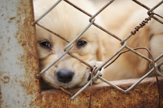 Puppy Mills A Persistent Problem in Ohio | Scene and Heard