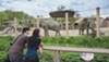 Taking in the view at the Cleveland Metroparks Zoo