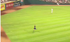 Video: Indians Fan Bolts Across Field, Scales Outfield Wall (2)