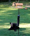 A black bear who took up temporary residence on Kirtland Chardon Road this weekend.
