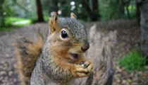 One Squirrel Takes Out Power in Downtown Akron This Morning