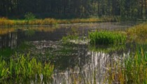 Opponents Fight to Protect Ohio Wetlands from Development