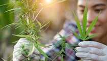 Ohio Farmers Begin Navigating Hemp, CBD Production
