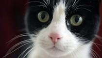 CatVideoFest Returns to Cedar Lee Next Weekend