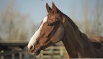 Film Spotlight: Dark Horse: The Incredible True Story of Dream Alliance