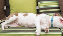 Widespread Bans on Pit Bulls Aren't Sensible Public Policy. So What's Going to Change That?