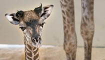 You Can Help Name Cleveland Metroparks Zoo's New Baby Giraffe