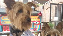 Proposed Ohio Bills Would Finally Allow Dogs on Restaurant Patios