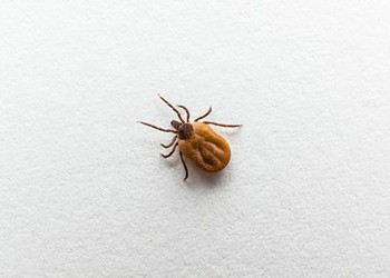 Ohio Will See an Increased Tick Population This Year