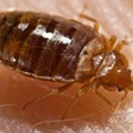 Cuyahoga County Ups Bed Bug Extermination Funding
