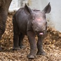 Another Adorable Baby Rhino Was Just Born at Cleveland Metroparks Zoo