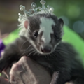 Skunk Fest Returns to North Ridgeville on Saturday to Celebrate Skunks