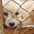 Puppy Mills A Persistent Problem in Ohio