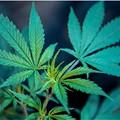 First Cleveland Medical Marijuana Dispensary Opens Thursday