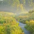 Herbicide Spraying Begins at Mentor Marsh
