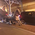 Horse Collapses Downtown, Igniting Renewed Fury Over Horse-Drawn Carriages in Cleveland