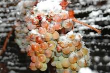 813b63e3_ice_wine.jpg