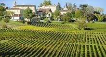 7ce12095_vineyard-saint-emilion-bordeaux-and-the-wine-country-france_main.jpg