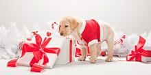 65af70a5_o-pet-gifts-ideas-facebook.jpg