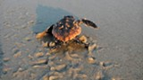 cover-turtle.jpg