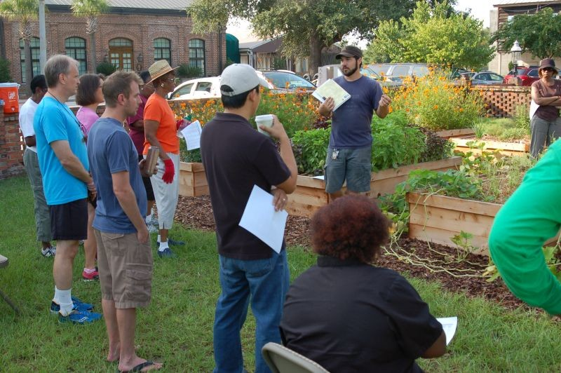 At the CRI Healthy Garden at Trustees' Garden, some of the volunteer gardeners find they are not the only newcomers. Then, making new friends is enjoyable as digging and planting.
