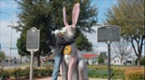 Big and bold: The world's largest rabbit