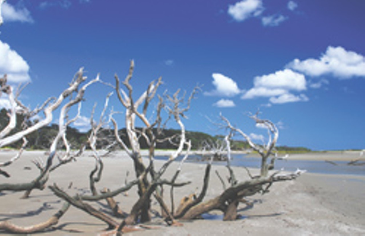 Driftwood On An Ossabaw Beach