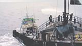 Greenpeace's Ocean Warrior attempts to repel shark fishing boats