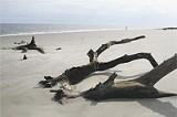 JIM MOREKIS - Jekyll's Driftwood Beach