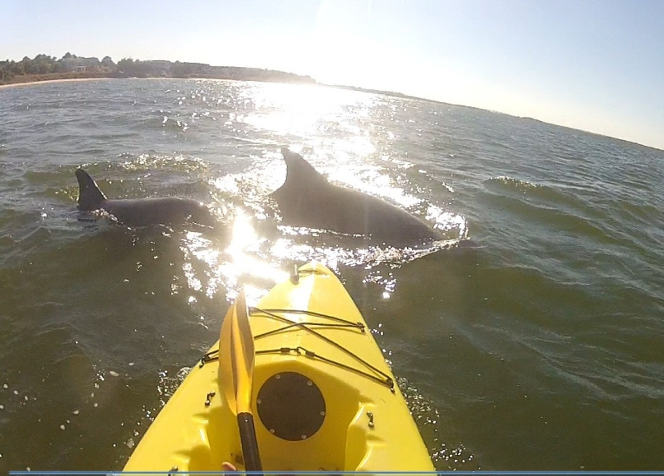 Muriel Lindsay photographs a pod of dolphins across the bow of her kayak 'Buttercup' at the mouth of the Savannah River.