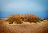 saraah-tybee_beach.jpg