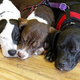 68d4f8b8_sleeping_puppies.jpg