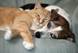 Pets are faithful companions for people and often become best friends with each other. Photo: ©iStock.com/McIntire.