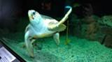 environ-turtle.jpg