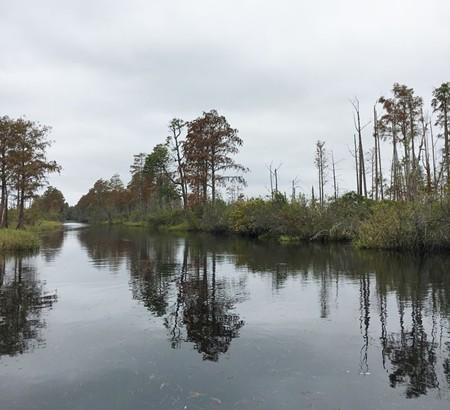 civil-swamp4-12.jpg