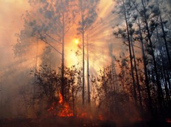 """""""Sun Through Smoke and Fire in Longleaf"""" by Randy Tate."""
