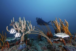 environment-diver_sponges_gorgonians_and_fishes_credit-gr.jpg