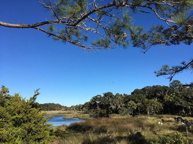 Ossabaw's marshlands. Photo by Jann Lane.