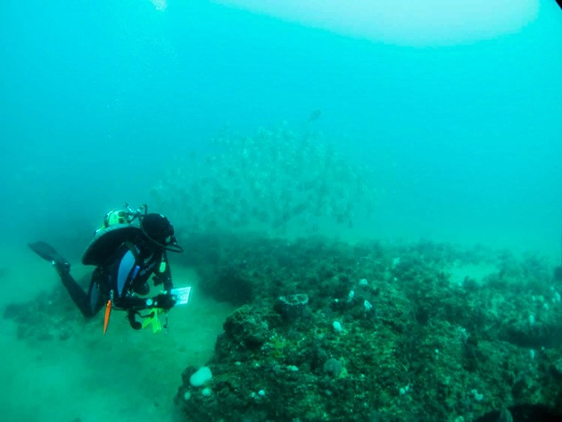 A diver examines fish and sponges at Gray's Reef National Marine Sanctuary. - COURTESY OF GRAY'S REEF NATIONAL MARINE SANCTUARY