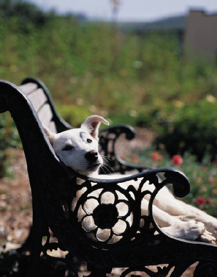 A dog lounges on a bench in the Bryan County Bark Park. - PHOTO COURTESY OF BRYAN COUNTY BARK PARK