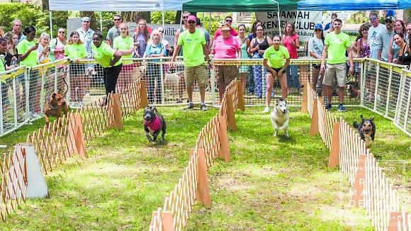 doggiecarnival-dogracestmd-34.jpg