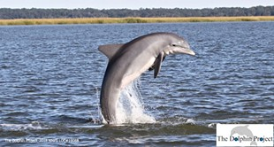 For the love of dolphins