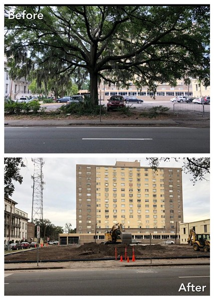Before/after shot of the laurel oak that stood on the Drayton corridor.