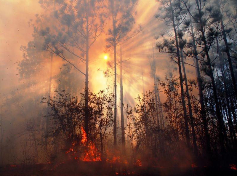 """Sun Through Smoke and Fire in Longleaf"" by Randy Tate."