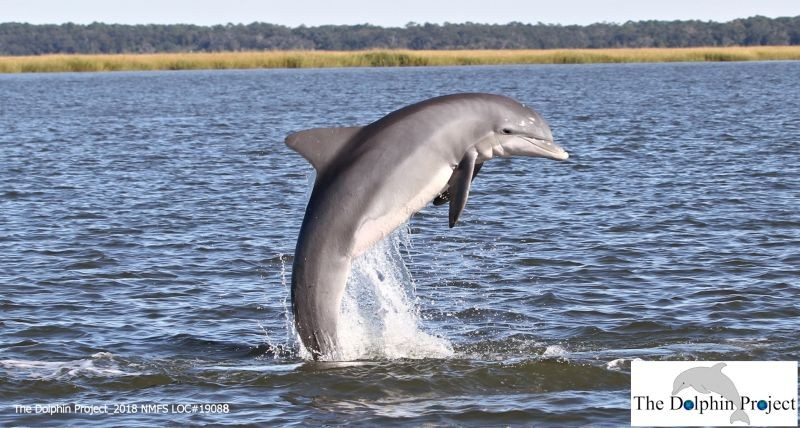 THE DOLPHIN PROJECT 1028 NMFS LOC#19088