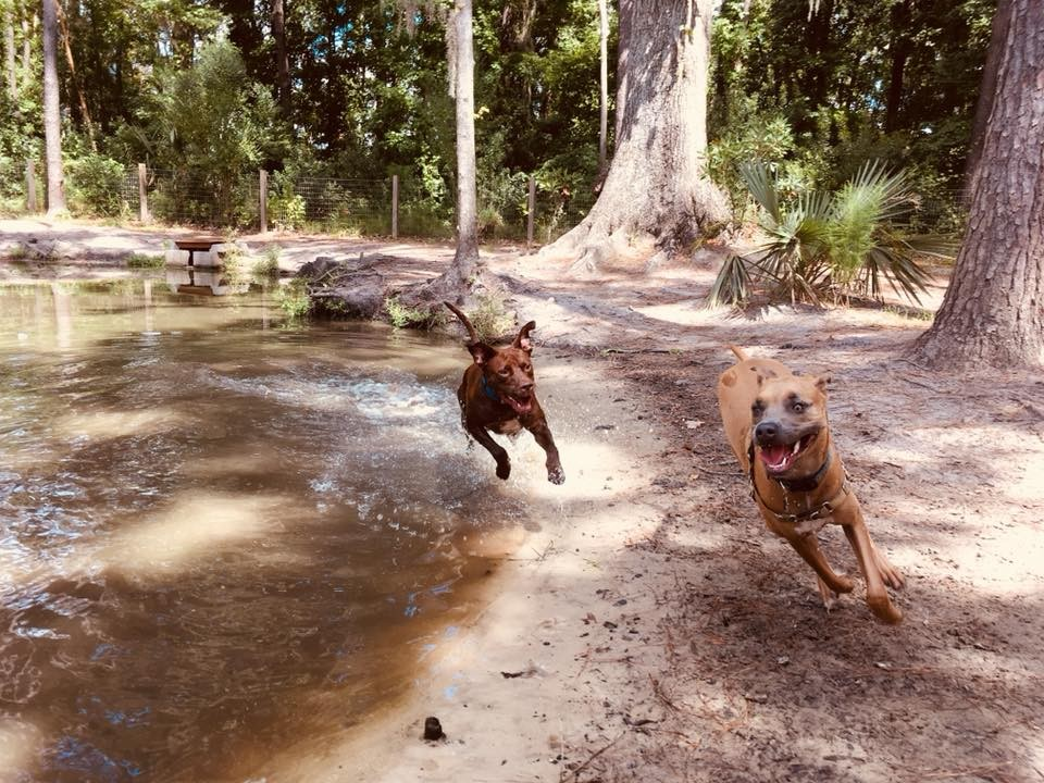 Dogs play in the Bryan County Bark Park.