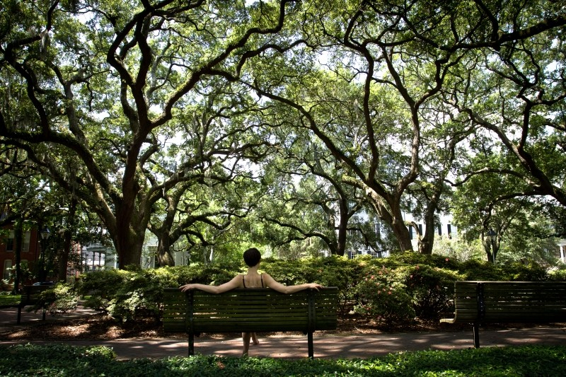 State Of The Trees Environment Savannah News Events