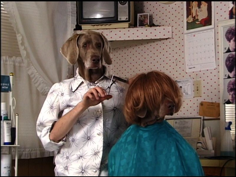 Fay/Sesame Street. William Wegman. Courtesy Sperone Westwater Gallery, New York.