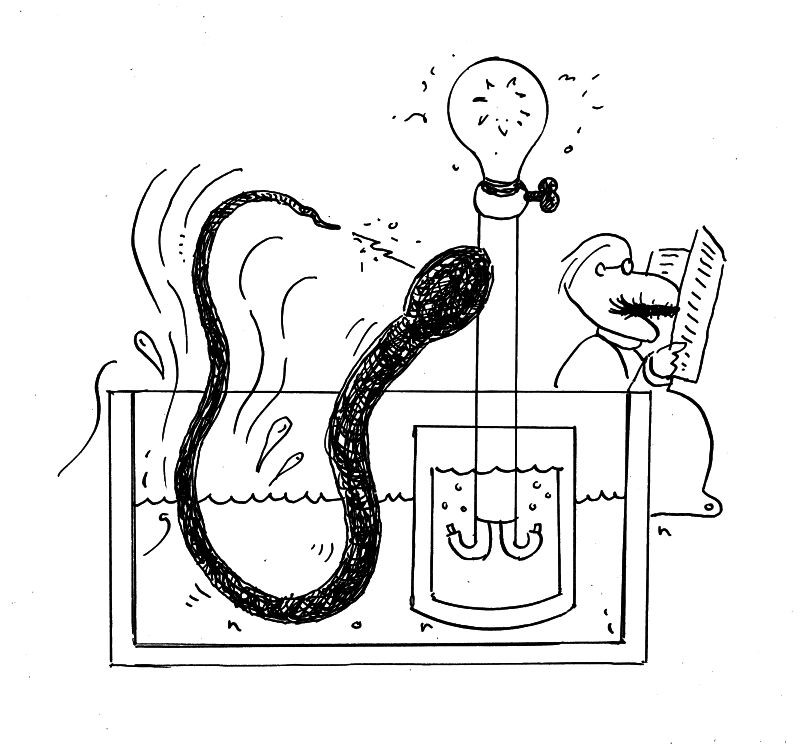 install how does electric eel make electricity